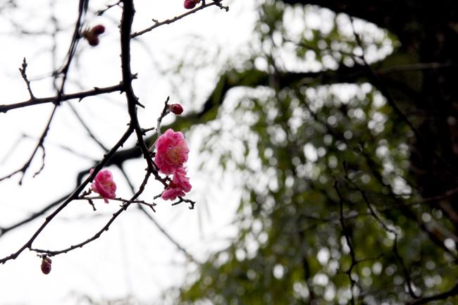 dujiangyan-blog-1