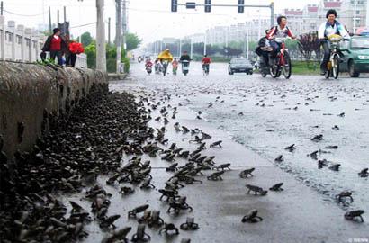 frog-earthquake-china
