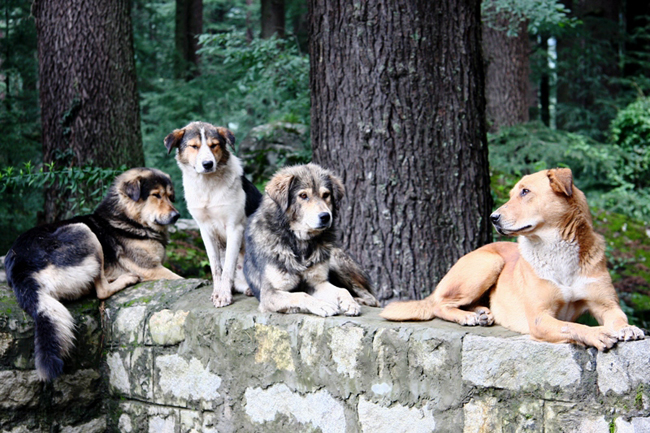 dogs-group-portrait