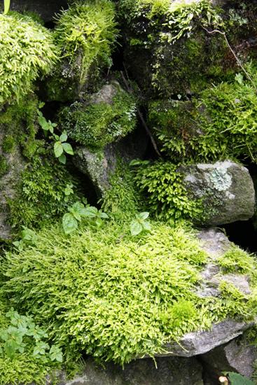 moss-rocks-vashisht