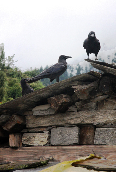 old-roof-birds