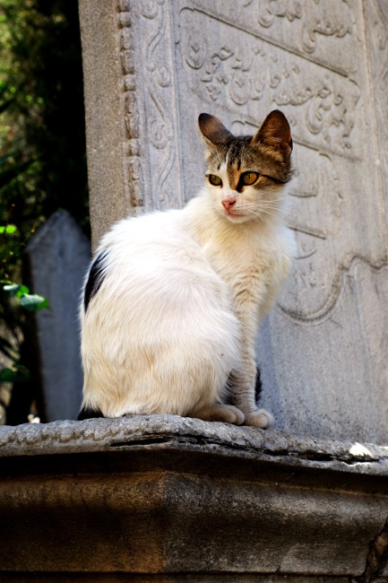 cemetery cat 1_opt