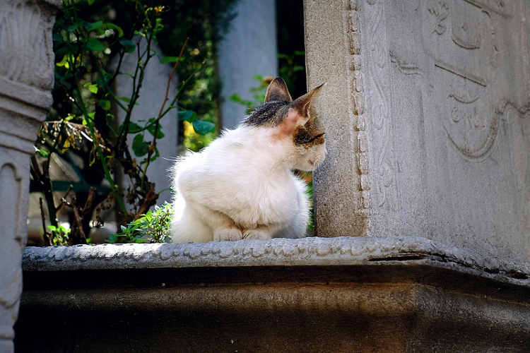 cemetery cat 2_opt